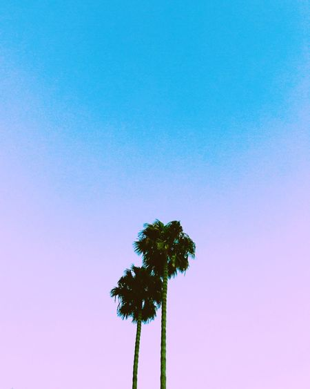 Low angle view of silhouette palm tree against clear sky