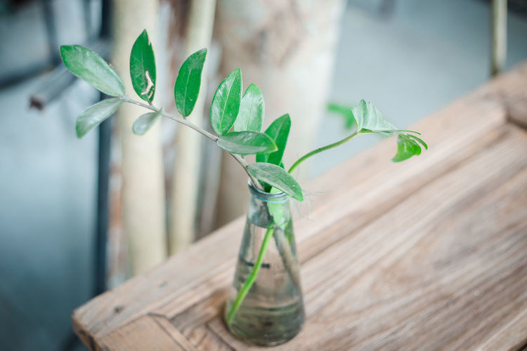 Close-up of plant in vase on wooden table