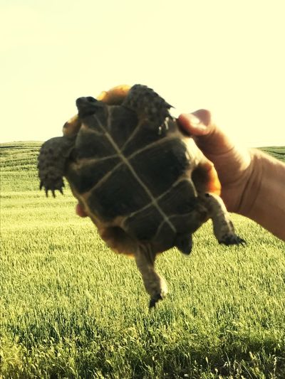 #turtle Human Hand One Person Mammal Human Body Part Domestic Animals Hand Pets One Animal Nature A New Beginning