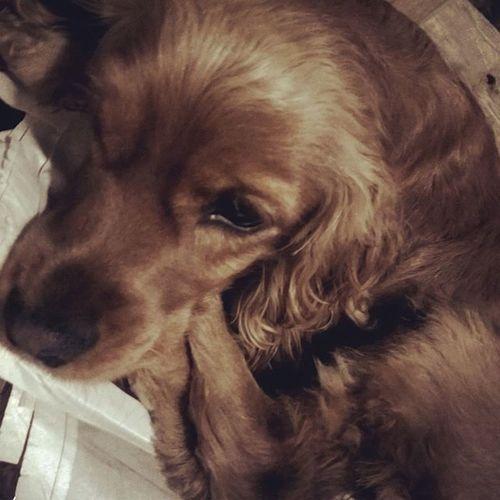 Ya la extrañava Dogs Dogsofinstagram Miperrita Lamascotadecasa