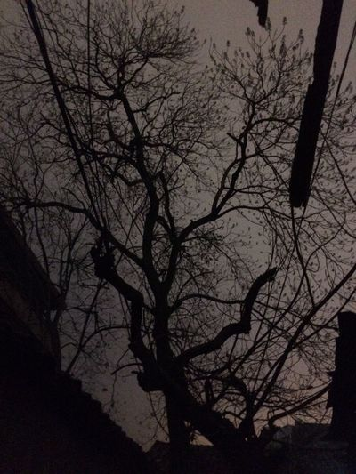 the tree under night