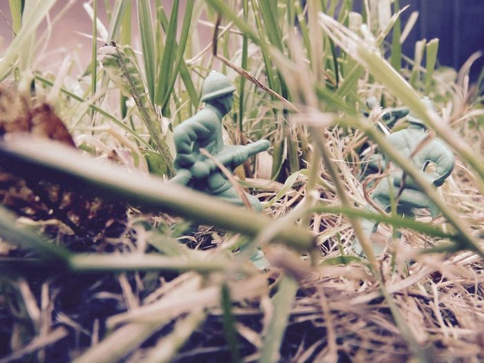 Selective Focus Nature Outdoors Close-up Green Green Color Macro Photography Macro Toy Soldier Toy Soldiers Toy Photography Grass EyeEmNewHere