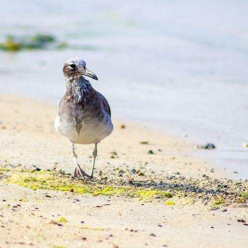 Close-up of seagull perching at beach