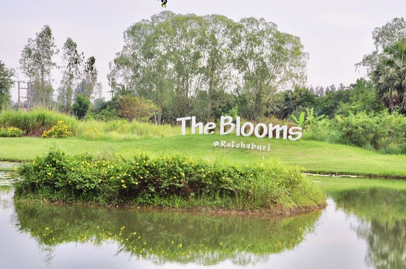 The Blooms