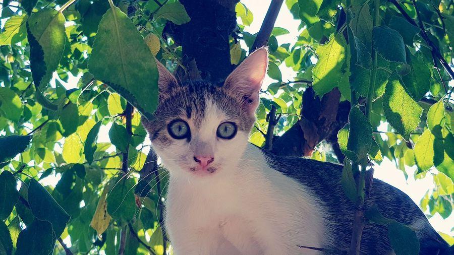Catlover Animal