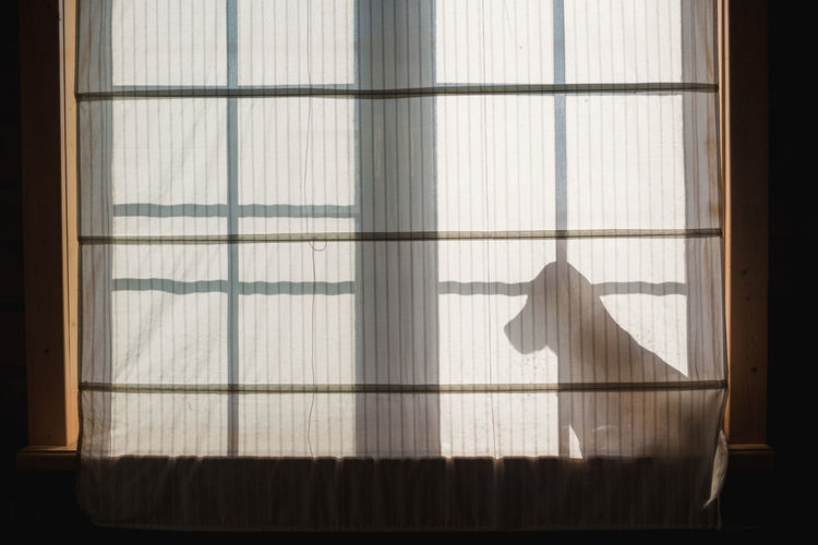 Beagle silhouette against the window. Alone Backlit Beagle Curtain Dog Domestic Animals Light Looking Out Pet Silhouette Sitting Stick Out Tail Waiting Window Windowsill Fresh On Market 2017