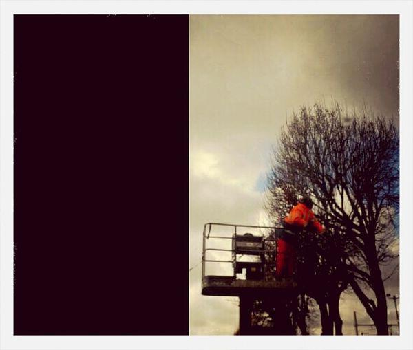 Man Work Autumn Tree
