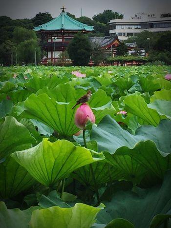 A bird on lotus flower Lotus Flower Bird Temple