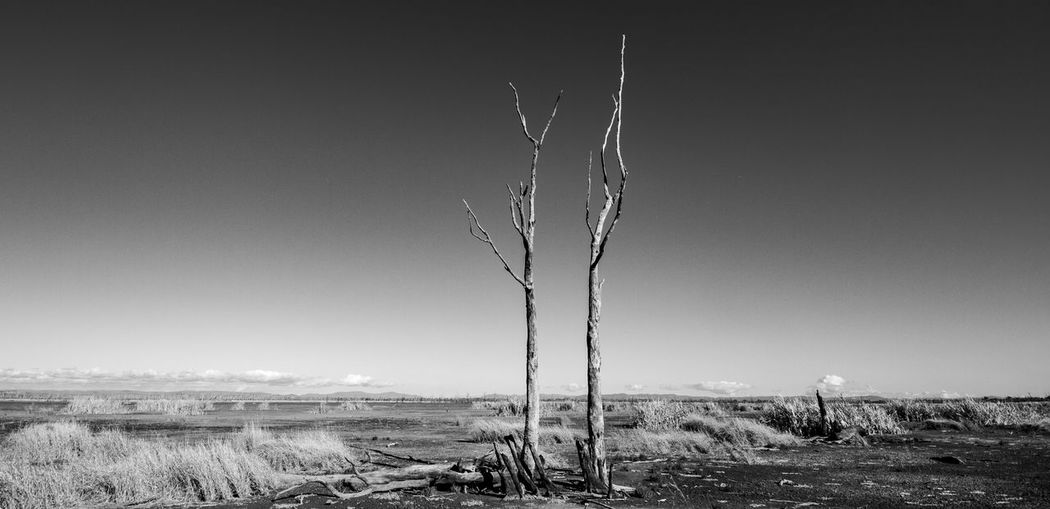 Winton wetlands B And W Canon 7D HDR Arid Climate Beauty In Nature Black And White Copy Space Day Environment Field Landscape Monochrome Nature No People Outdoors Plant Remote Scenics - Nature Sky Tranquil Scene Tranquility Tree The Great Outdoors - 2018 EyeEm Awards The Great Outdoors - 2018 EyeEm Awards