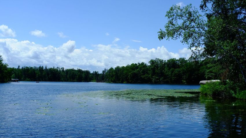 Lake Country Minnesota Beauty In Nature Blue Cloud - Sky Day Forest Growth Lake Landscape Nature No People Outdoors Pequot Lakes Scenics Sky Tranquil Scene Tranquility Tree Water Waterfront