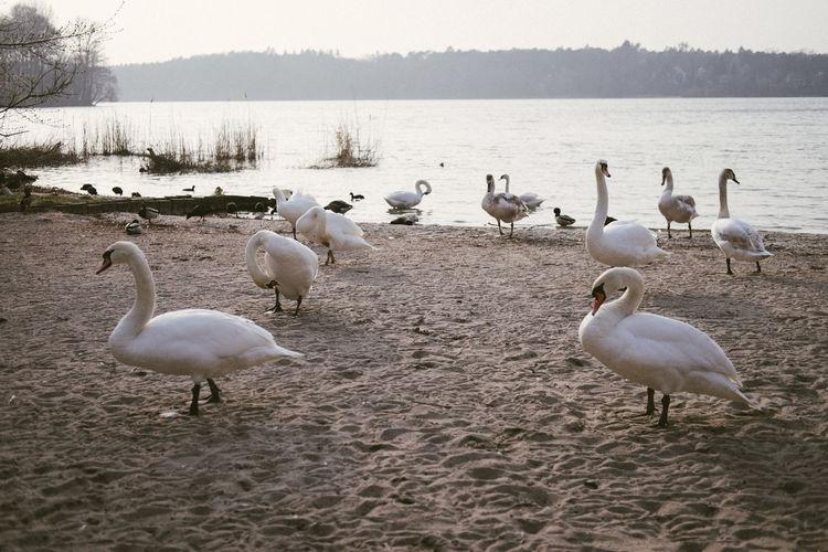 Flock of seagulls at lakeshore