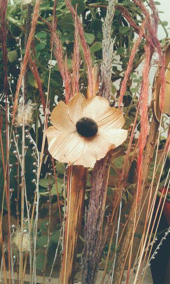 Nature Plant Flores Flowers Day Naturaleza Plantas Plantas Y Hojas
