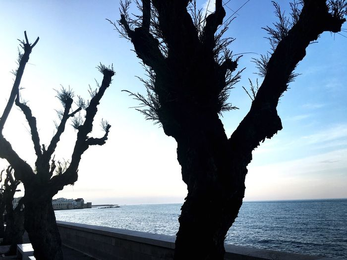 Sky Water Tree Sea Plant Horizon Beauty In Nature Nature Tranquility Tranquil Scene Beach Horizon Over Water Tree Trunk Scenics - Nature Outdoors Land Trunk Growth No People Silhouette