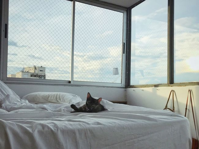 Window Bedroom Pets Domestic Life Cat One Animal Bed