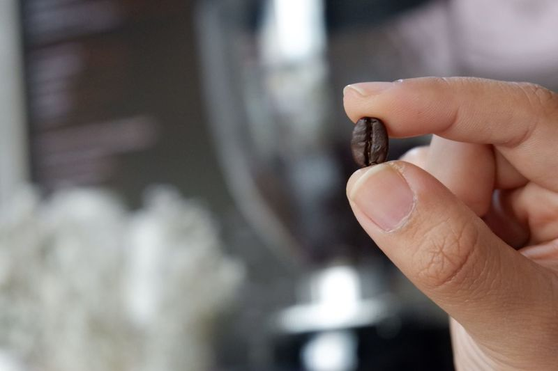 Cropped image of hand holding roasted coffee bean
