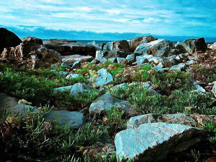 Wild rockery Landscape Beauty In Nature Outdoors Nature Rock - Object Dorset Coast Bartononsea Sea Rocks And Water