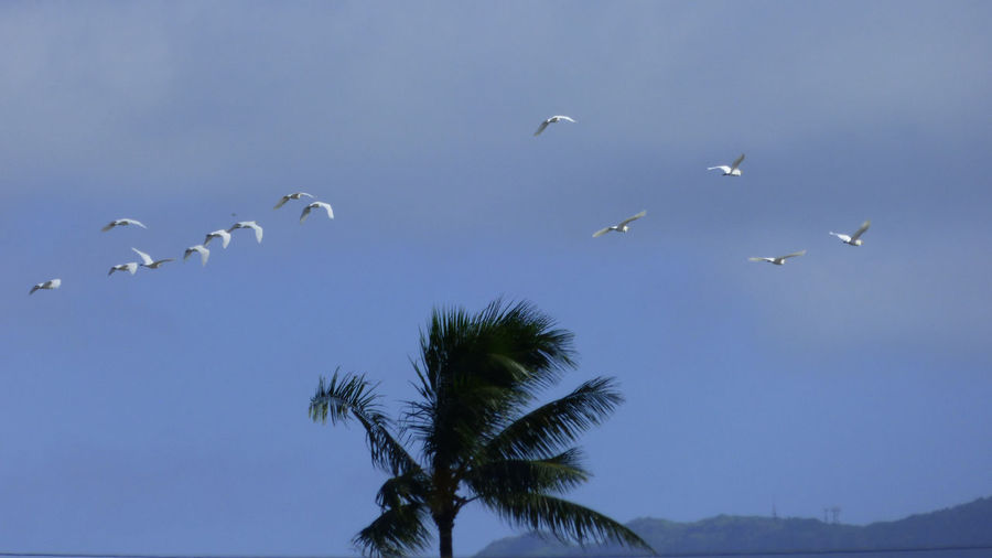 Flock Of Birds Flying Over Coconut Palm Tree Against Sky