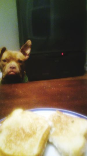 Beggingdog Sharing Is Caring You Gonna Eat That? I Love My Dog