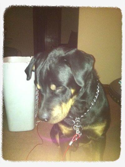 My Rot Dog