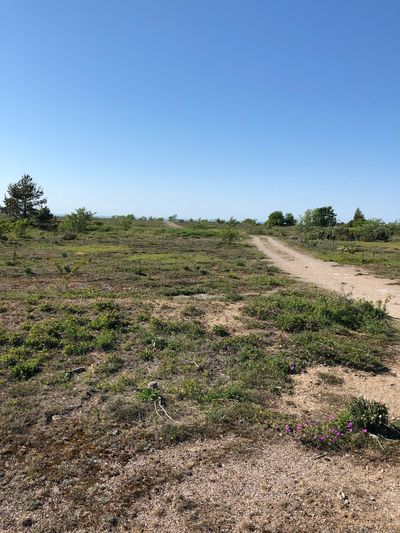 Sky Plant Copy Space Landscape Land Field Clear Sky