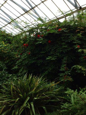 Royal Botanic Garden in Edinburgh. Royal Botanic Gardens Garden Botanical Gardens Edinburgh Scotland Glasshouse Walking Around Green Trees