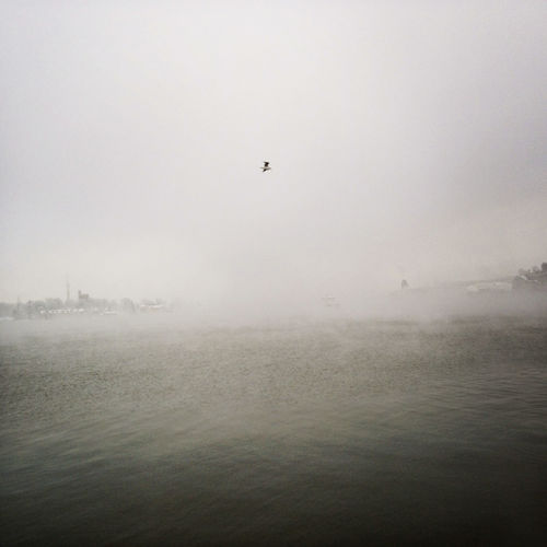 A lonely seagull in the fog. Beauty In Nature Bird Copy Space Flying Fog No People Outdoors Sky Tranquil Scene Tranquility Water Waterfront