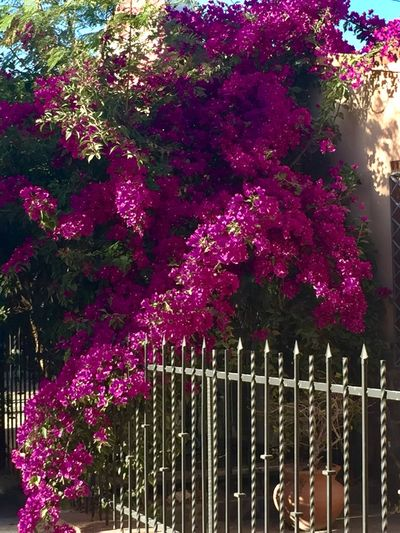 Pink flowering plants and trees in park