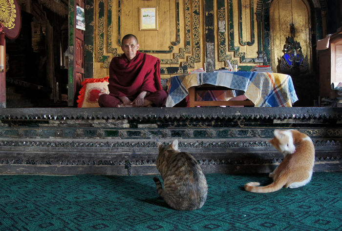 Life in the monastery, Off the beaten track, in and around Taunggy, Shan State, Myanmar Monastery Shan State Adult Architecture Building Exterior Built Structure Day Domestic Animals Friendship Full Length Indoors  Looking At Camera Men Myanmar One Animal Only Men People Pets Portrait Real People Sitting Two People Young Adult