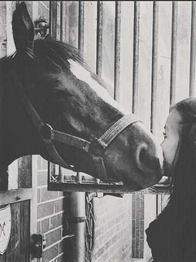 Follow Me Outdoor Horse Beautiful Animals