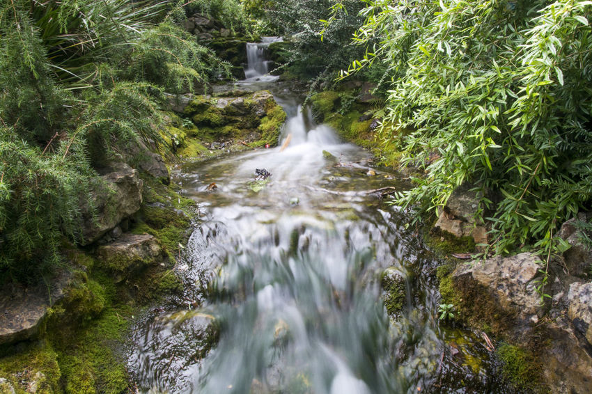 A long exposure shot of a small waterfall in National Botanic Gardens of Dublin, Ireland Beauty In Nature Forest Green Color Long Exposure Motion Nature Scenics Water Waterfall