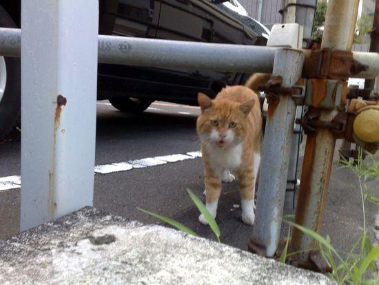 Stray Cat Cat Meow! Car