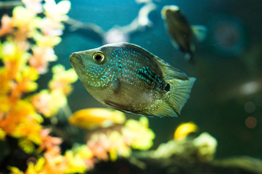Acquarium Animal Themes Animal Wildlife Animals In The Wild Aquarium Beauty In Nature Close-up Day Fin - Fish Part Fish Focus On Foreground Indoors  Nature No People One Animal Sea Life Swimming UnderSea Underwater Water