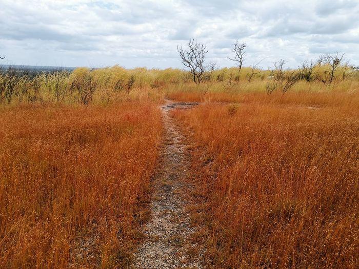 Tree Marsh