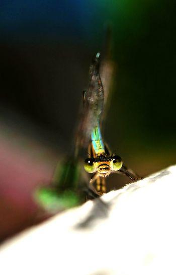 EyeEm Best Shots Photooftheday Macro Insect Nature Sun Libellule Taking Photos Light And Shadow OpenEdit