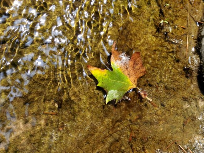 Leaves🌿 Leaves_collection Leaves In Water Colorful Leaves Yellow&green Streamlet Nature Micro Nature Microscopic View Nature_collection Sunlight ☀ Summertime