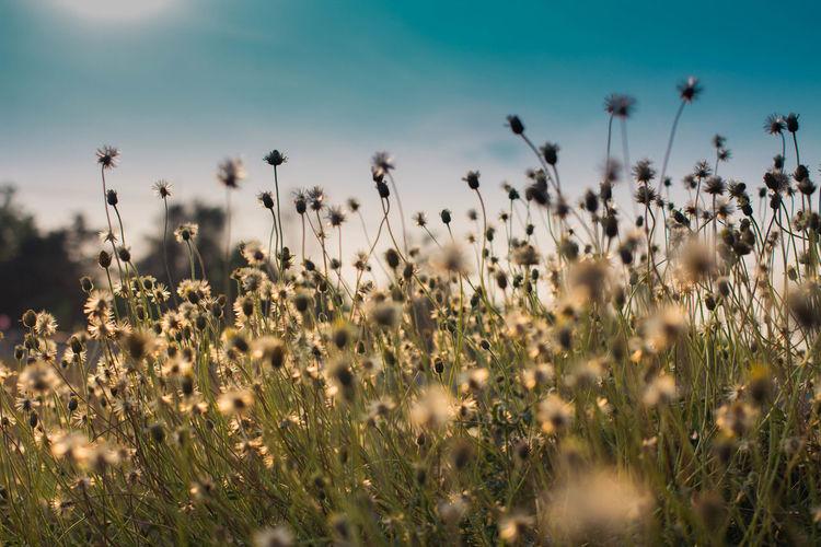Flowering plants on field against sky