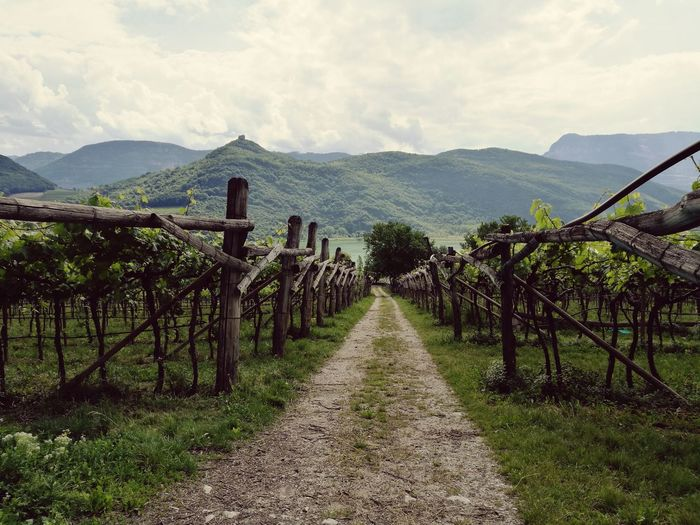Landscape Vineyard Land Sky Scenics - Nature Plant Nature Environment Agriculture Mountain Field Rural Scene Food And Drink Cloud - Sky No People Vine Fruit Beauty In Nature Gardasee Lago Di Garda Romantic Road Traveling