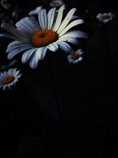 Flower White First Eyeem Photo