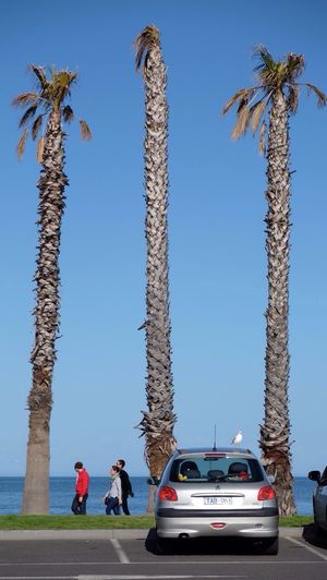 Find the seagull!! Enjoying Life Sunny Sea Landscape Beautiful Day