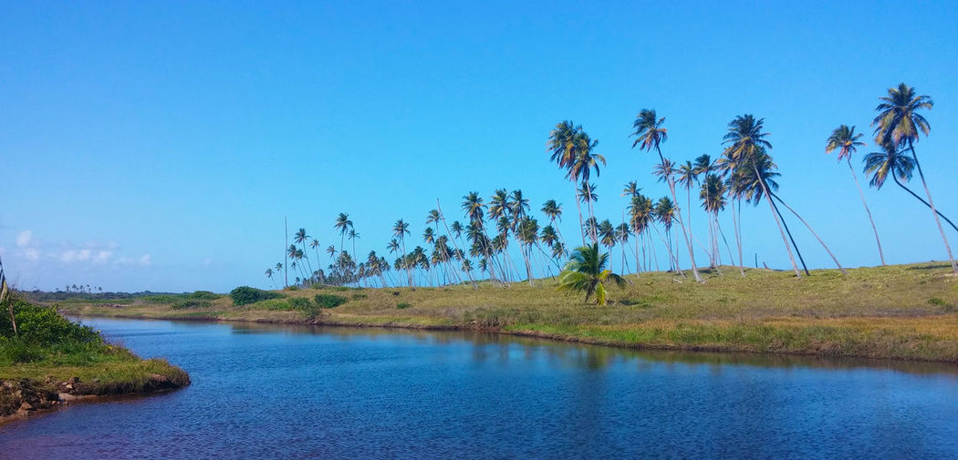 Bahia Brazil Camaçari Coconut Beauty In Nature Blue Coast Coconut Palm Tree Environment Guarajuba Imbassai Lagoons Nature Outdoors Plant River Sky Tranquility Tropical Climate