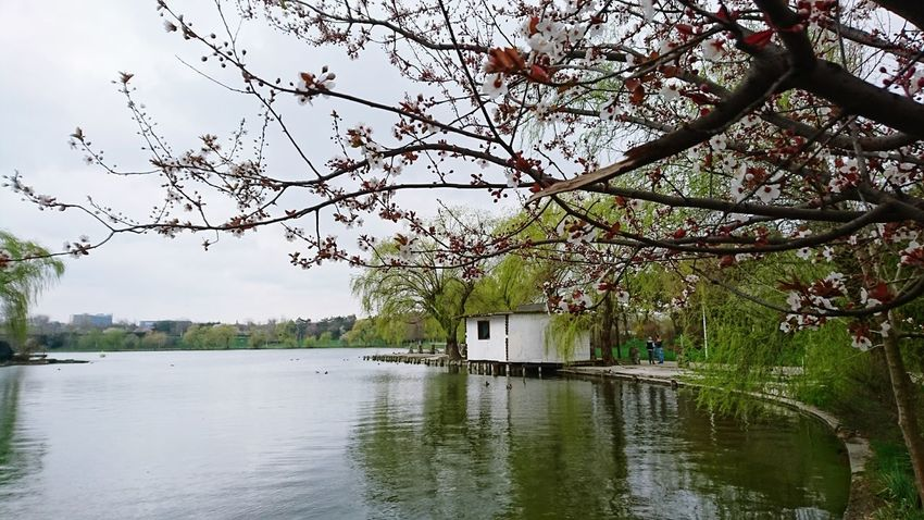 Spring Springtime Spring Is Coming  Spring Time Spring Has Arrived Spring Flowers Spring Is In The Air Spring Blossoms Spring Blooms Spring Lake Spring Landscape Lake View Lake March Showcase Bucharest Romania Spring Green Urban Spring Fever Landscapes With WhiteWall