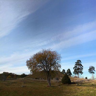 Trädet framför högen. H öga Uppsala KungBj örn Swedishautumn