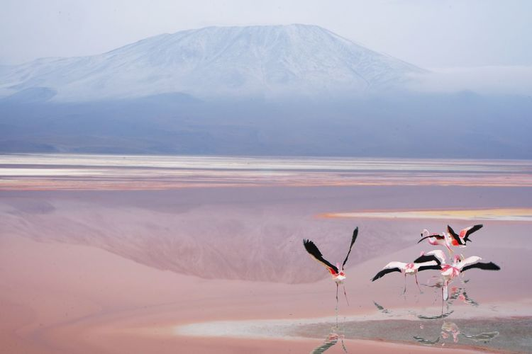 Flamingos over lake against mountains