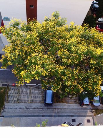 From My Point Of View Yellow Look Down Goodmorning Viewfrommyroom Treescollection Dramatic Angles