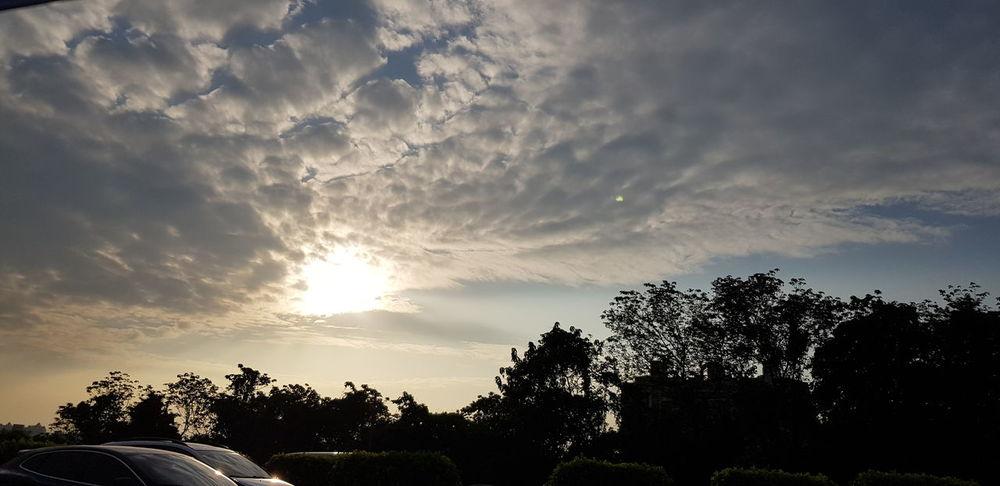Tree Sunset Storm Cloud Dramatic Sky Sky Cloud - Sky