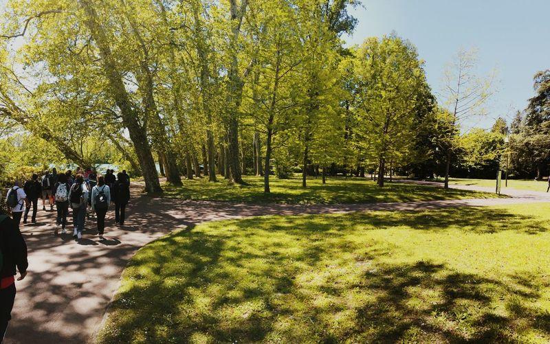 People walking in park