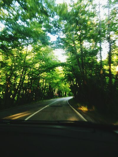 Tree Travel Nature Road Car No People Journey Sky Driving Road Trip