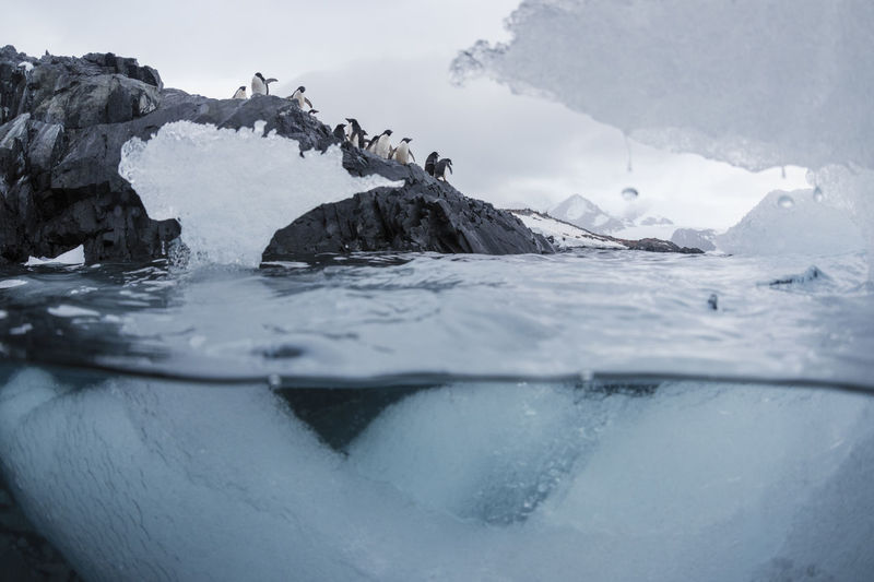 Low Angle View Of Penguins On Rock Formation By Sea