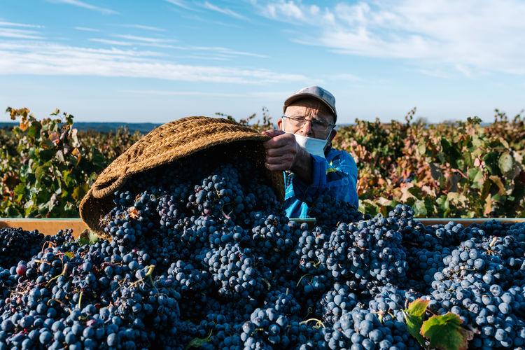 Full length of man having grapes