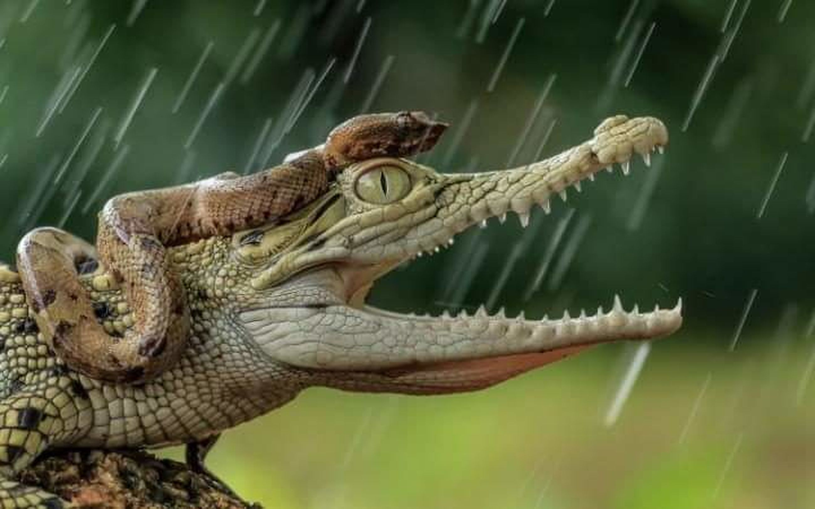 animal themes, animal, one animal, animal wildlife, reptile, animals in the wild, crocodile, animal body part, water, mouth open, mouth, sign, vertebrate, animal teeth, no people, animal head, warning sign, underwater, sea, communication, animal mouth, profile view, aggression